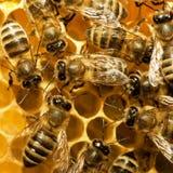 Abeilles sur la ruche images libres de droits
