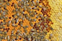 Abeilles sur le cadre de nid d'abeilles Image libre de droits