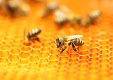Abeilles sur le nid d'abeilles Image libre de droits