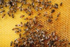 Abeilles sur le nid d'abeilles Photographie stock
