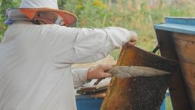 Abeilles sur le nid d'abeilles La dame d'apiculteur de récolte de miel enlève doucement des abeilles du cadre banque de vidéos