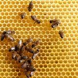 abeilles sur le peigne de miel Images stock
