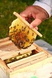 Abeilles sur le petit nid d'abeilles de mariage Photos stock