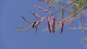 Abeilles sur une branche et un ciel bleu Images libres de droits