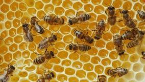 Abeilles travaillant au nid d'abeilles jaune avec du miel Image stock