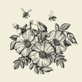 Abeilles volant à la fleur L'apiculture tirée par la main Illustration de vecteur illustration stock