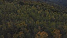 Abejón aéreo del bosque del otoño sobre un bosque y una montaña en un día soleado almacen de metraje de vídeo