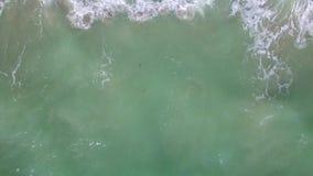 Abejón aéreo sobre la playa