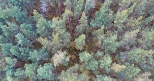 Abejón aéreo tirado sobre el bosque noreuropeo almacen de metraje de vídeo