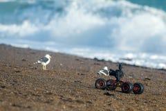 Abejón de tierra terrestre con la cámara mientras que conduce en la playa Fotos de archivo libres de regalías