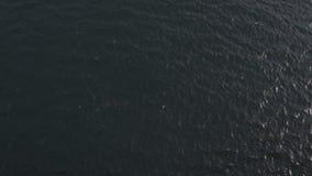 Abejón estático tirado del Oceany almacen de video