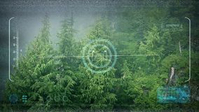 Abejón POV que vuela sobre Misty Forest metrajes