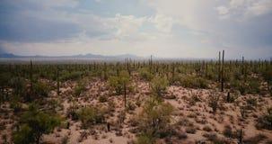 Abejón que vuela adelante sobre el valle escénico del campo del desierto del cactus grande del Saguaro en sorprender la reserva A almacen de metraje de vídeo