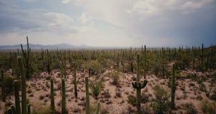 Abejón que vuela muy bajo sobre el valle grande atmosférico del cactus en desierto asombroso del verano en la reserva del parque  almacen de video