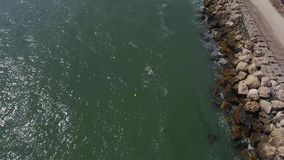 Abejón sobre la orilla del mar almacen de video