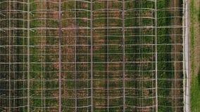 Abejón tirado de los campos y de las casas verdes, país de la granja almacen de video