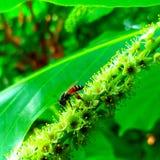 abeja Foto de archivo libre de regalías