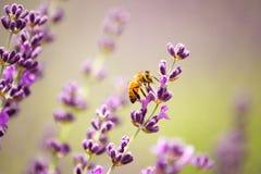 abeja Fotografía de archivo
