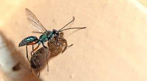 Abeja, abeja hermosa Foto de archivo
