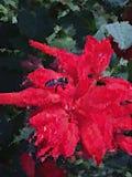 Abeja abstracta y papel pintado rojo de la flor Foto de archivo
