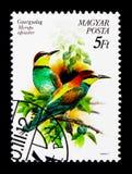 Abeja-comedor europeo (apiaster) del Merops, serie de los pájaros, circa 1990 Foto de archivo libre de regalías