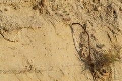 Abeja-comedor que se sienta en la ladera 2 de la arena Fotos de archivo libres de regalías