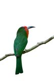 Abeja-comedor Rojo-barbudo Imagenes de archivo
