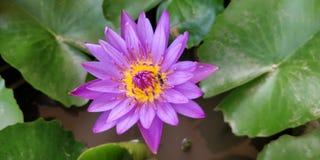 Abeja con la flor fotografía de archivo