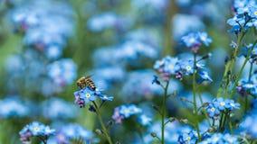 Abeja con la flor azul Imagen de archivo