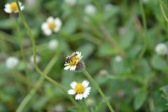 Abeja con las flores Imagenes de archivo