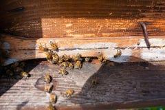 Abeja con polen que inscribe en la colmena Fotos de archivo