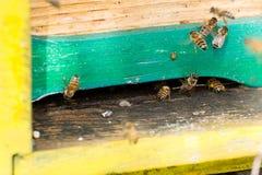 Abeja con polen que inscribe en la colmena Imágenes de archivo libres de regalías