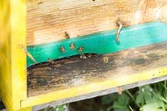 Abeja con polen que inscribe en la colmena Foto de archivo libre de regalías
