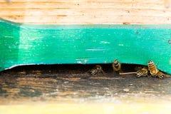 Abeja con polen que inscribe en la colmena Imagenes de archivo