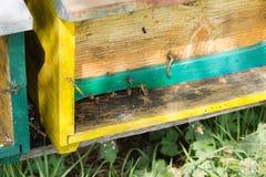 Abeja con polen que inscribe en la colmena Fotografía de archivo libre de regalías
