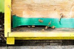 Abeja con polen que inscribe en la colmena Fotografía de archivo