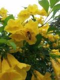 abeja de la flor Imágenes de archivo libres de regalías