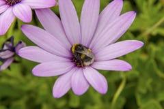 abeja de la flor Imagen de archivo