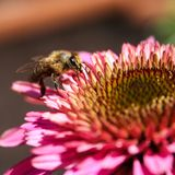 abeja de la flor Foto de archivo