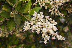 Abeja de la flor en un jardín Fotografía de archivo libre de regalías
