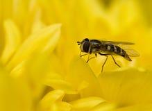 Abeja de la miel Foto de archivo