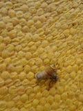 Abeja de la miel en el panal Foto de archivo