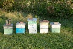 Abeja de la miel que cultiva las cajas y el equipo de la apicultura Imagen de archivo libre de regalías