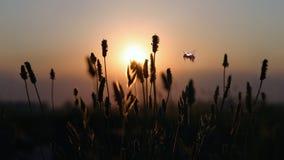Abeja de la puesta del sol Imagenes de archivo