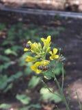 Abeja de los pares y naturaleza hermosa de las flores imagen de archivo libre de regalías