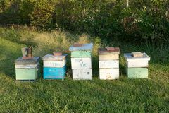 Abeja de madera que cultiva las cajas y el equipo de la apicultura Imagen de archivo libre de regalías