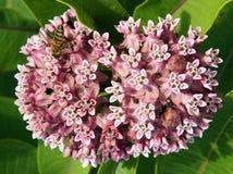 Abeja de trabajo en flores Imagenes de archivo