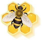 Abeja de trabajo en las células de la miel Fotografía de archivo libre de regalías