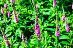 Abeja de trabajo que recoge el polen Imagen de archivo