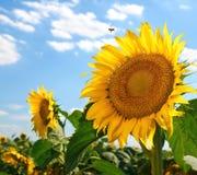 Escena soleada del verano Imágenes de archivo libres de regalías
